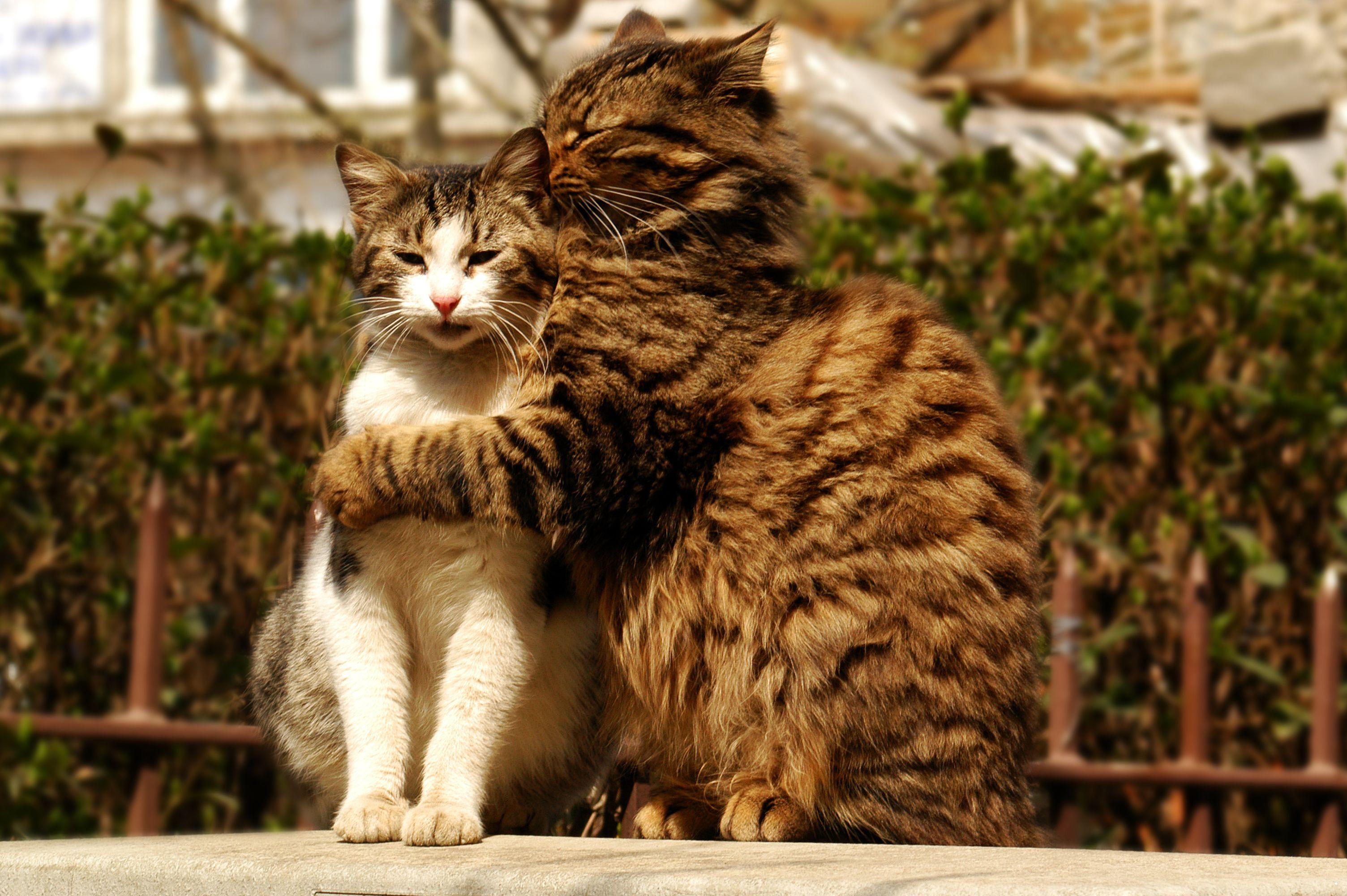 Chiens et chats : contrairement aux humains, ils voient la lumière ultraviolette