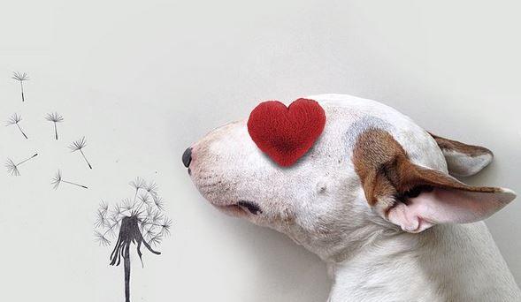 """Le chien, """"meilleur ami de l'homme"""""""