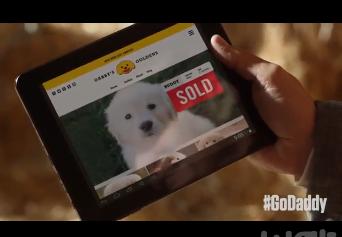 Super Bowl 2015 : une publicité montrant l'abandon d'un chiot crée la polémique