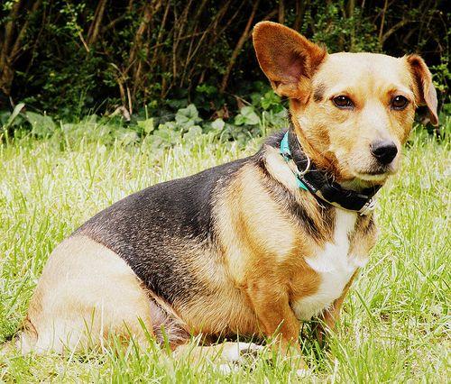 Les chiens préfèrent déféquer avec le corps aligné vers le nord ou le sud