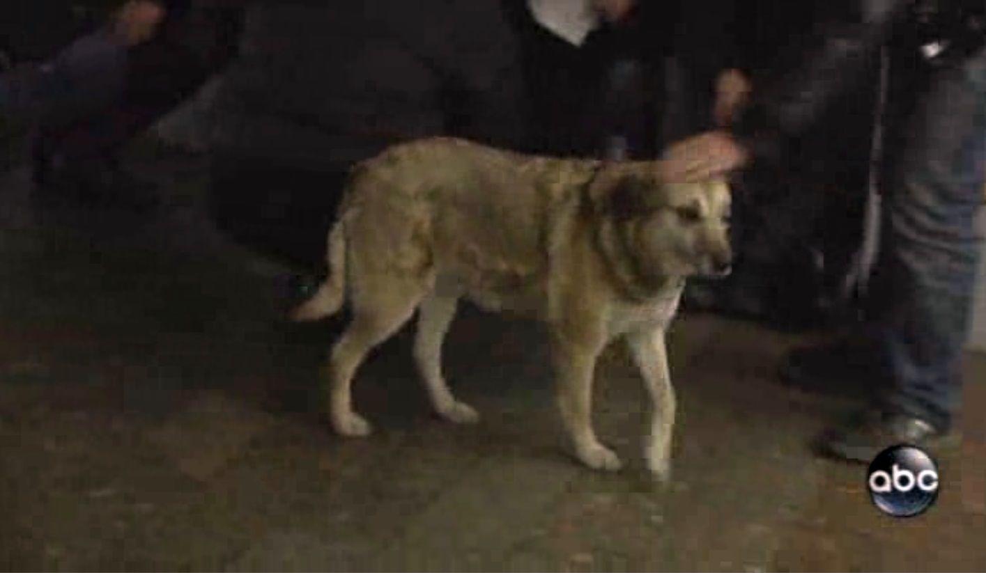 Certains des 35 000 chiens errants de Moscou sont capables de se déplacer en empruntant le métro.