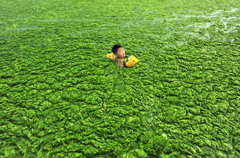 Lac pollué en Chine.