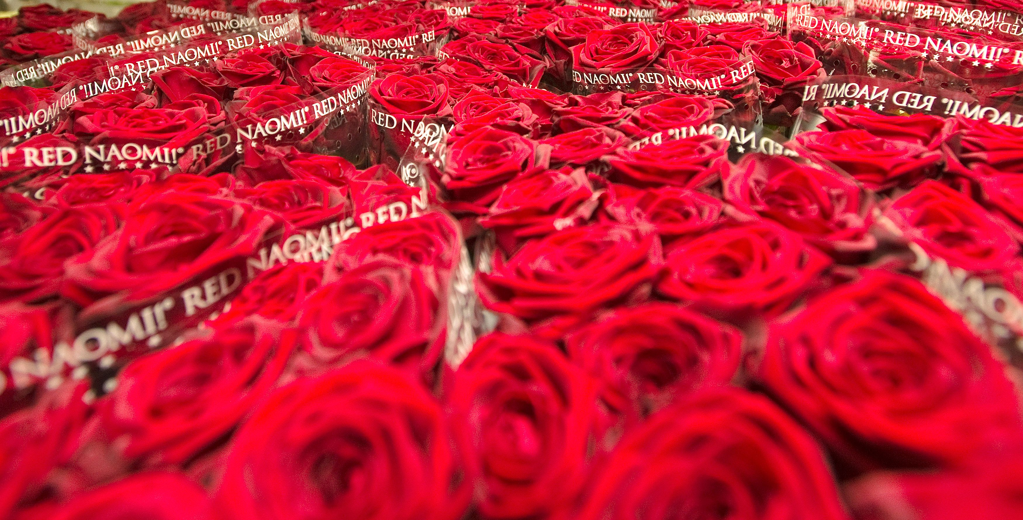 Pour François de Maublanc, président d'Aquarelle.com, la Saint-Valentin ne représente que 4% de son chiffre d'affaires.