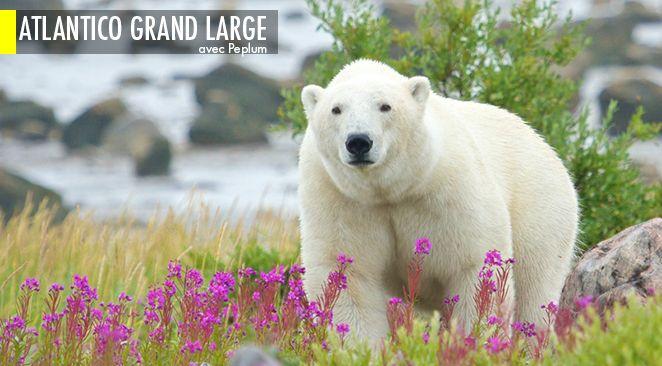 À la rencontre des ours canadiens