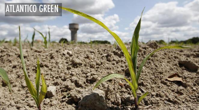 Et si parfois la taille en agriculture pouvait être vertueuse ?