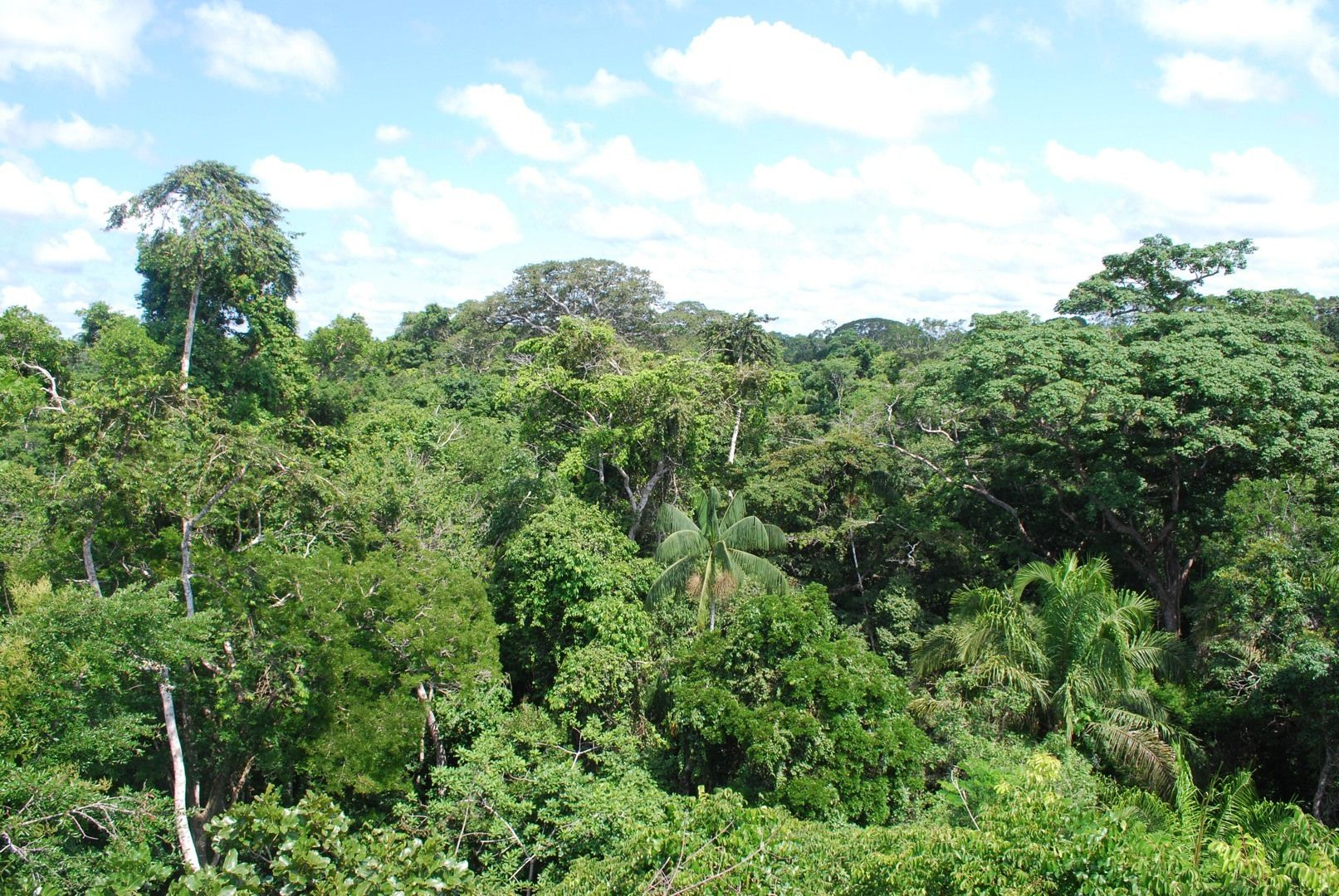 La jungle de Guyane.