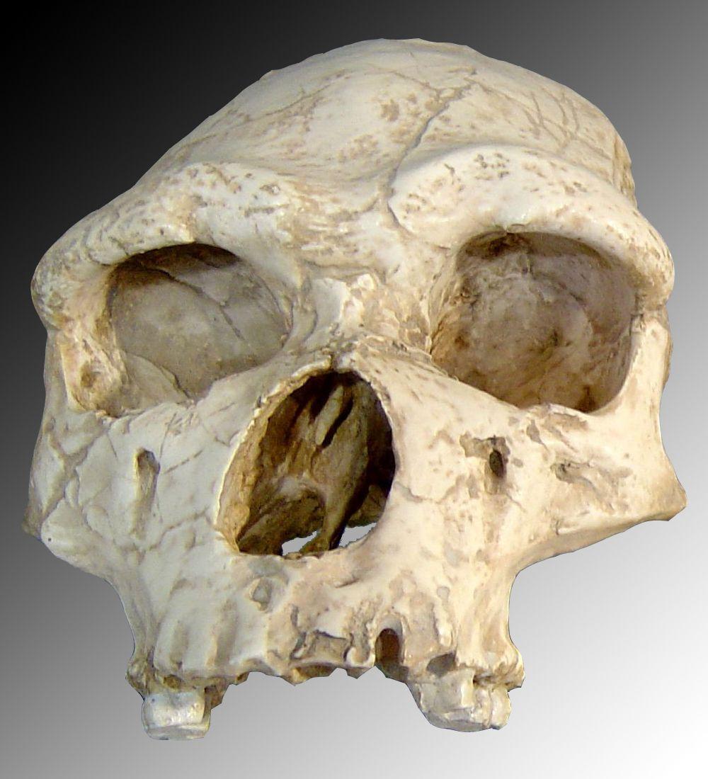 Toutes les créatures ne sont pas sur un pied d'égalité en termes de fossilisation. Nous avons la chance d'avoir des dents et des os, parties qui auront plus de chances de subsister à l'épreuve du temps.