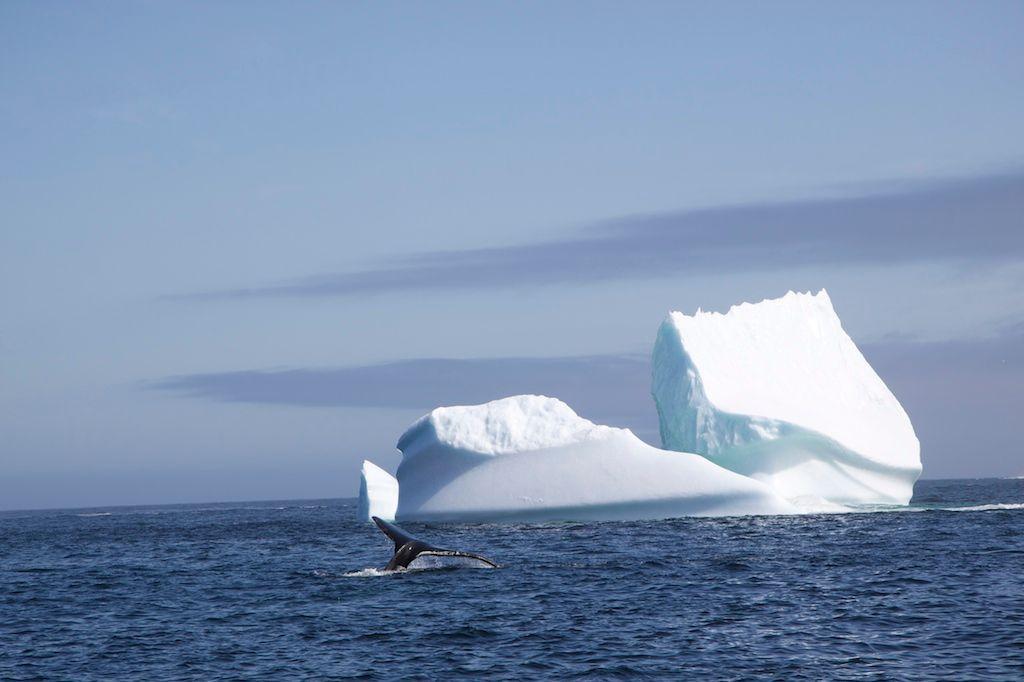 Ce scénario inquiétant pour les scientifiques qui est en train de se dessiner en Atlantique nord