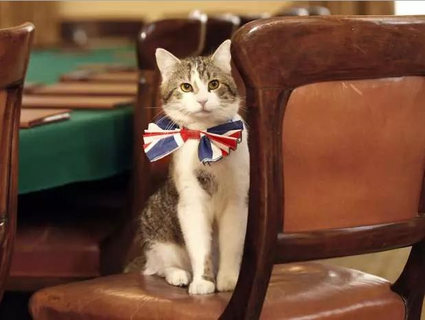 """Avec la démission de David Cameron, on découvre que son chat Larry """"était un mensonge"""""""