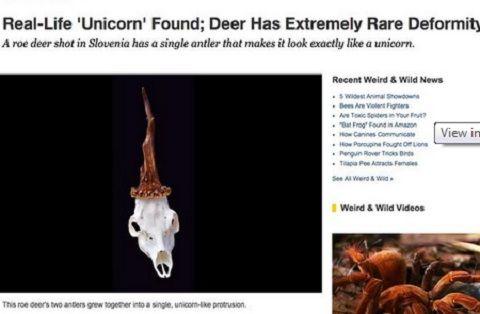 Capture d'écran du compte Twitter de National Geographic.