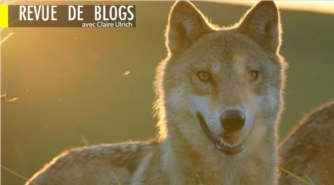Le dernier loup, film de Jean-Jacques Annaud