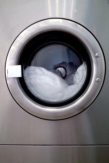 Un chat sort indemne d'une machine à laver