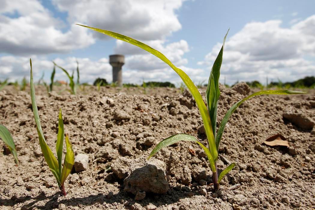 Journée mondiale contre la sécheresse : risque de crise alimentaire mondiale