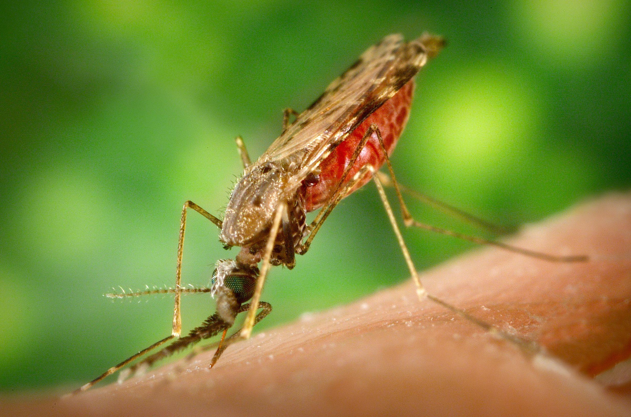 Odeur, température, couleur... Tout savoir sur ce qui attire les moustiques vers certaines peaux plutôt que d'autres