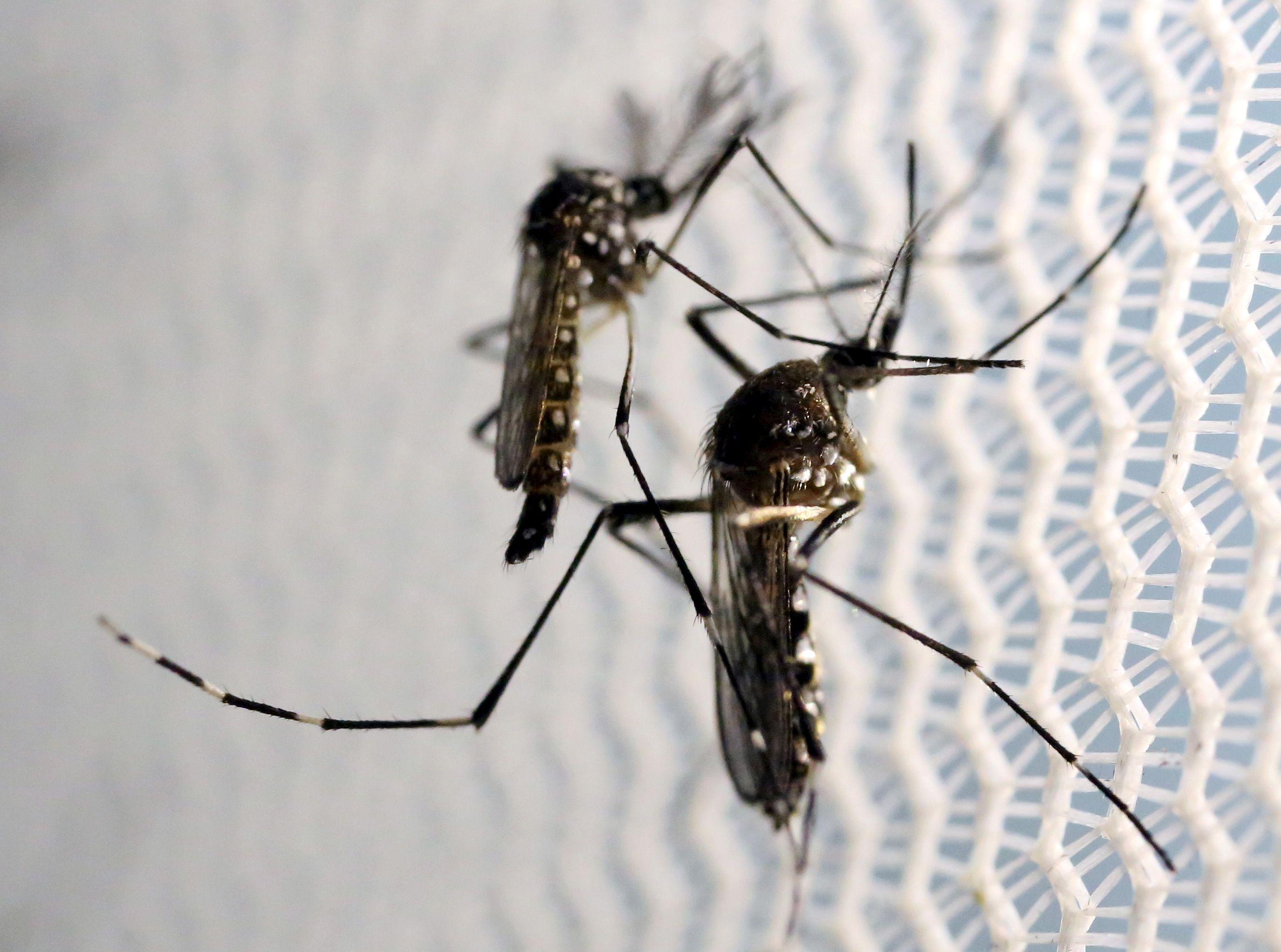 Un monde sans moustique : possibilité ou utopie ?
