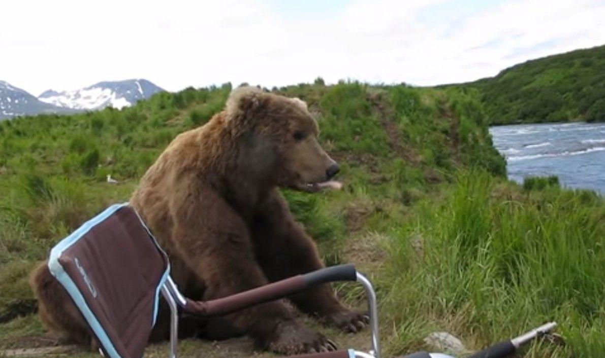 Mort tragique d'un soigneur tué par un ours