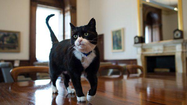 Royaume-Uni : Palmerston, le chat officiel du Foreign Office, est un philanthrope