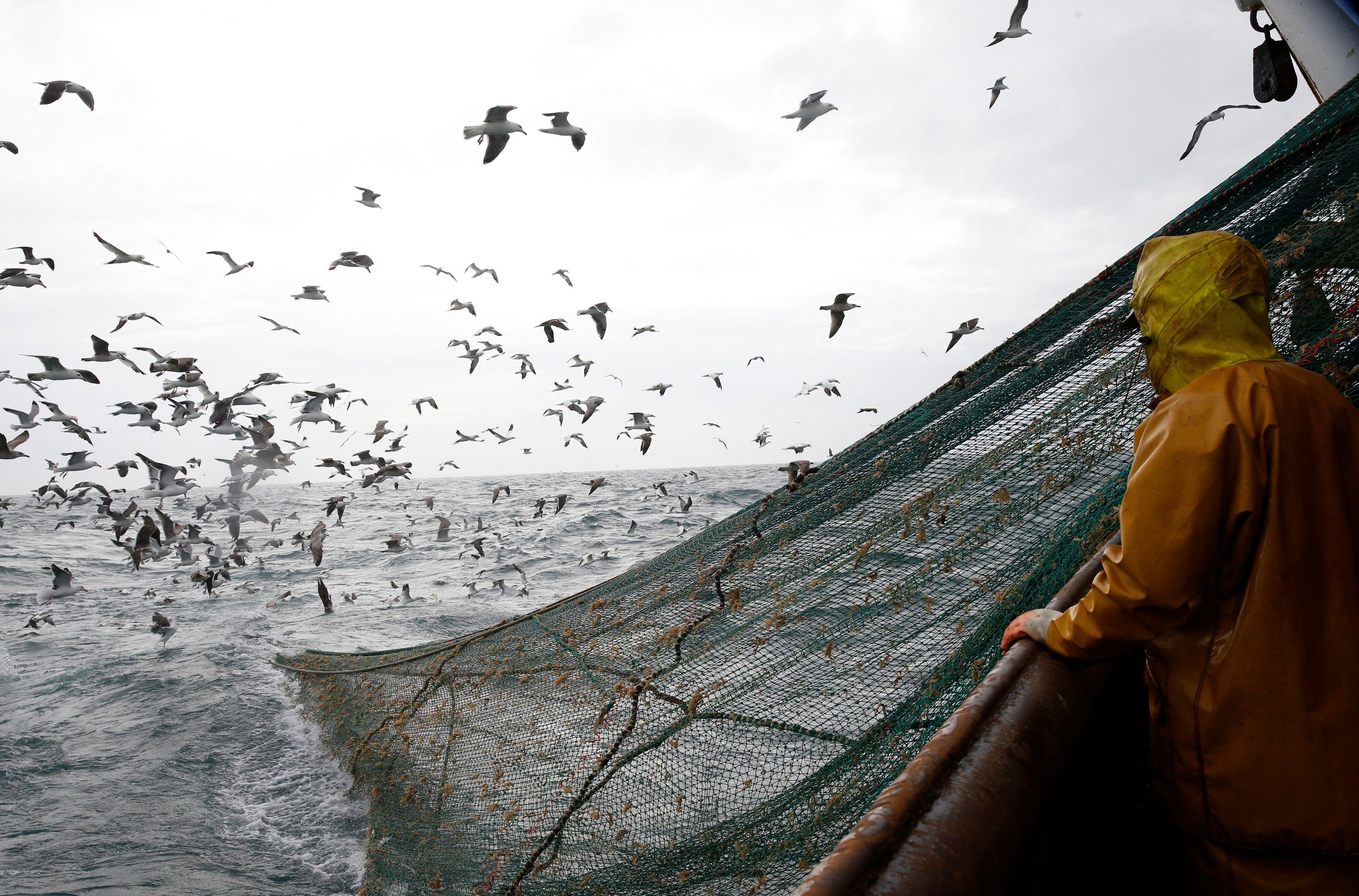 Le retour de la morue des Grands Bancs au large de la Terre-Neuve : un exemple à suivre pour le sauvetage de la vie des espèces