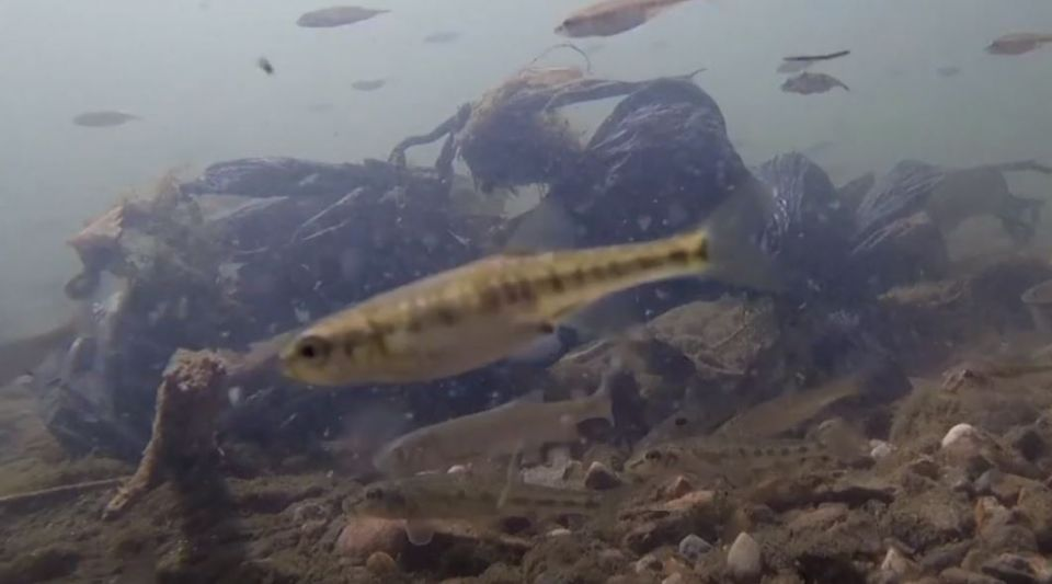 pollution plastique océan Atlantique
