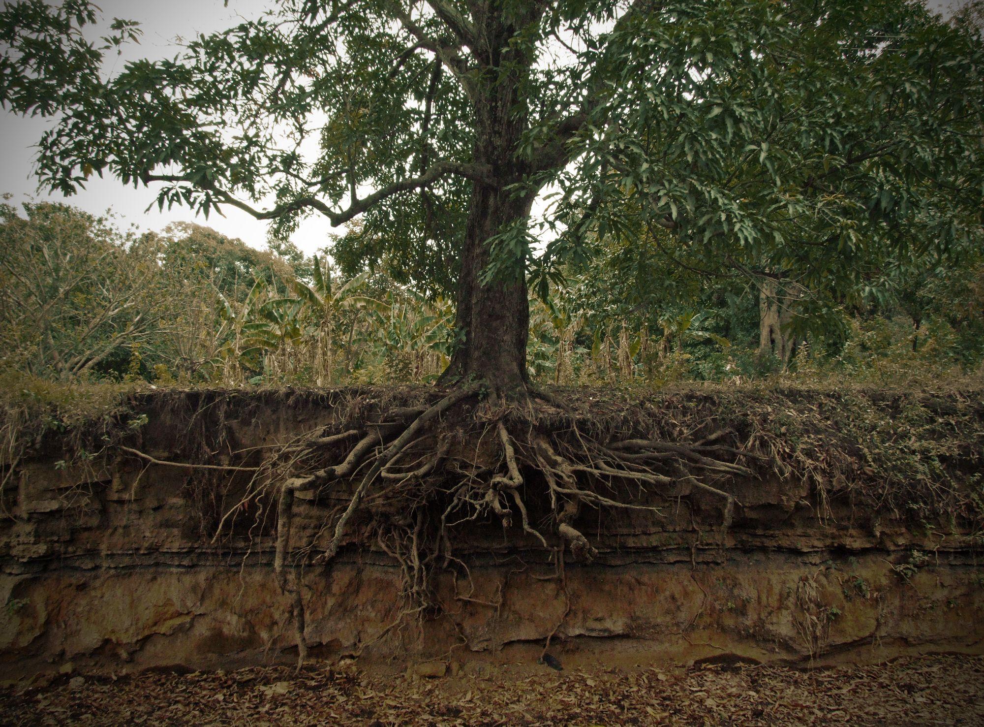 Quelles sont les racines de l'échec cuisant d'Europe Ecologie les Verts ?