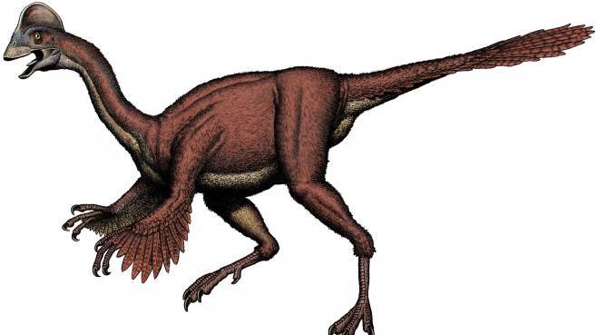 Le nouveau dinosaure a été baptisé Anzu Wyliei. Anzu.