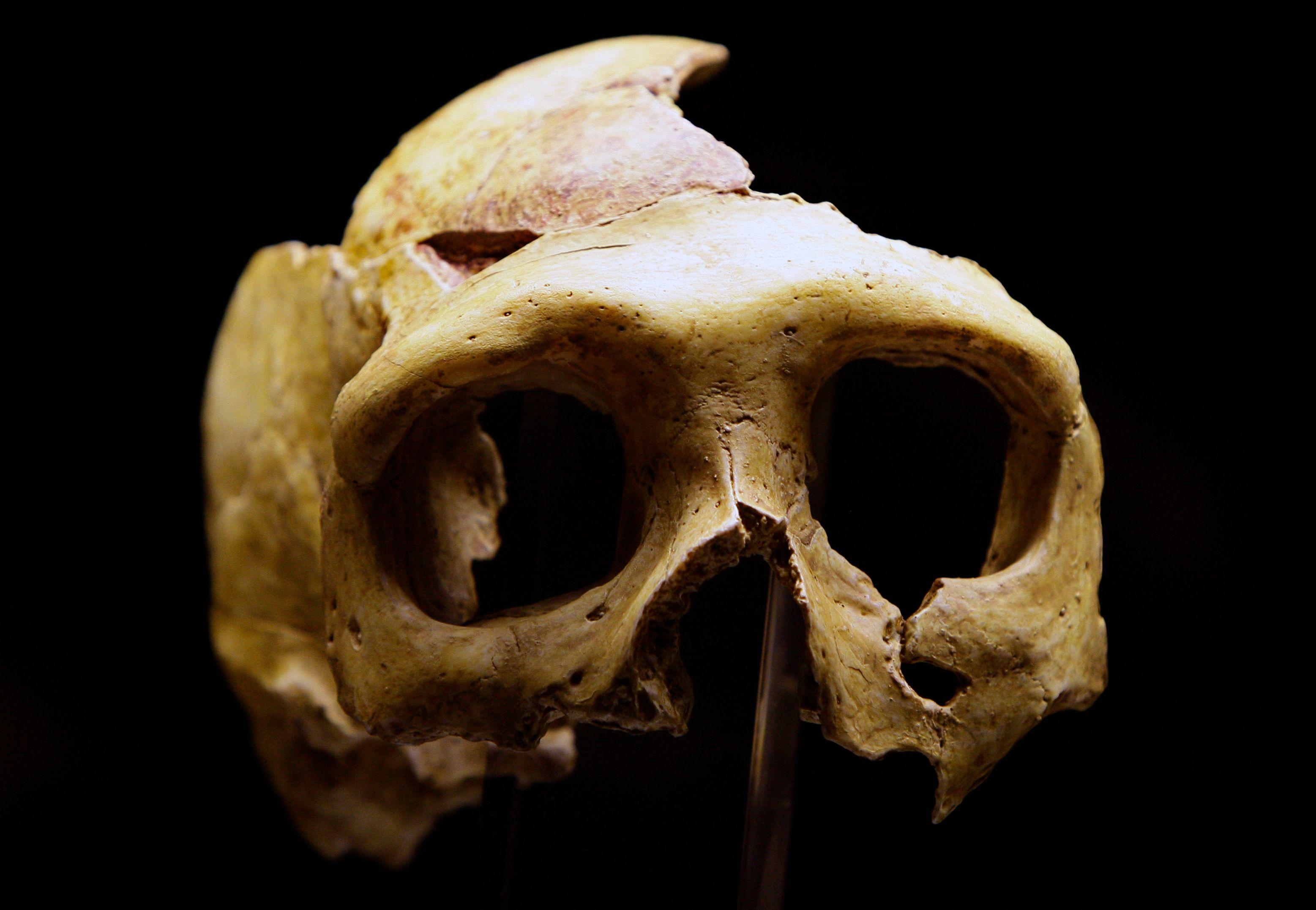 Une nouvelle étude vient de paraître sur les raisons qui ont pu conduire à la disparition de l'homme de Néandertal.