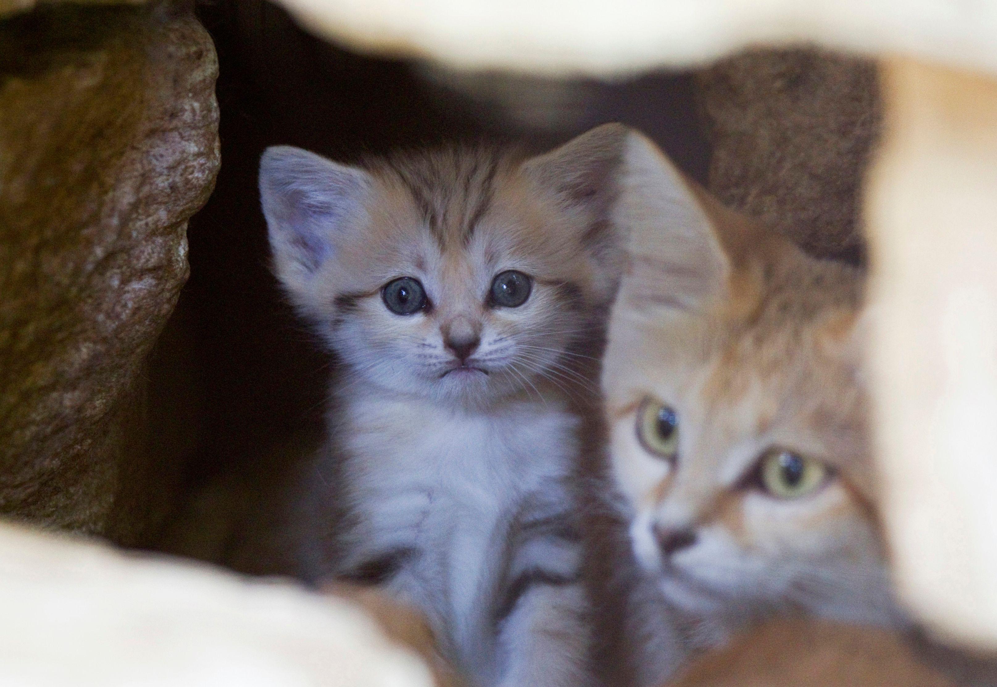 Au Vietnam, la viande de chat fait fureur