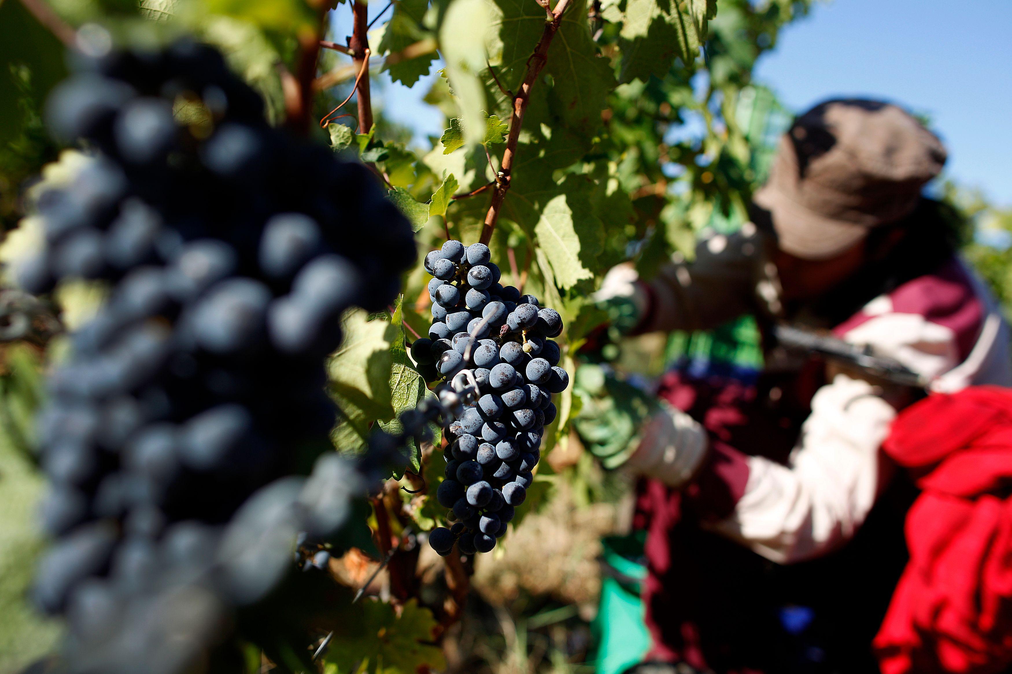 """""""Entreprendre dans le vin - Stratégies 360° pour réussir sur le marché mondial du vin"""", de Martin Cubertafond, publié aux Editions Eyrolles."""