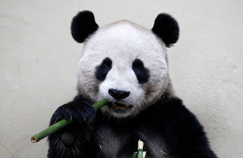 Petite géopolitique de l'économie des pandas