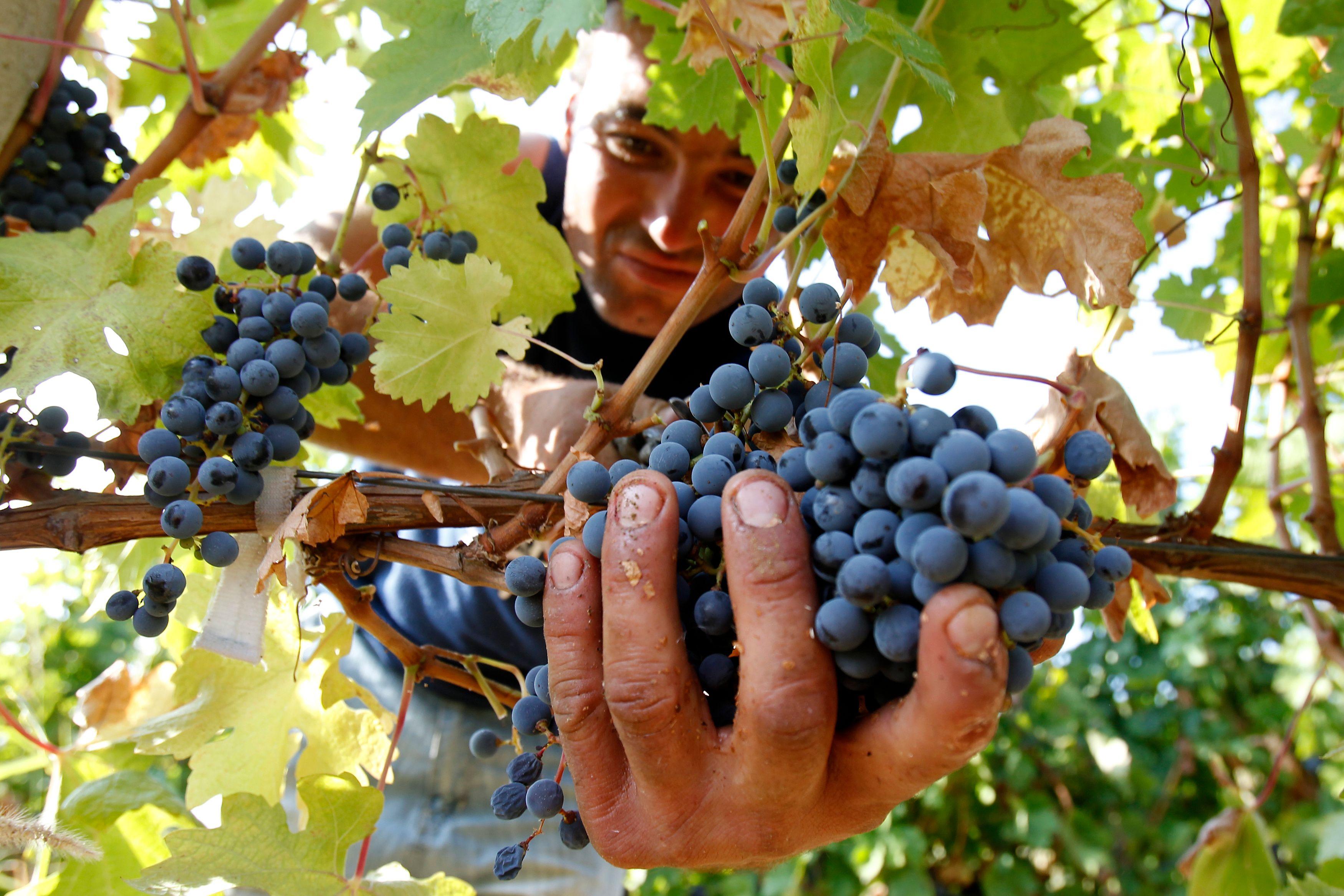 Les vignerons français continuent de vendre
