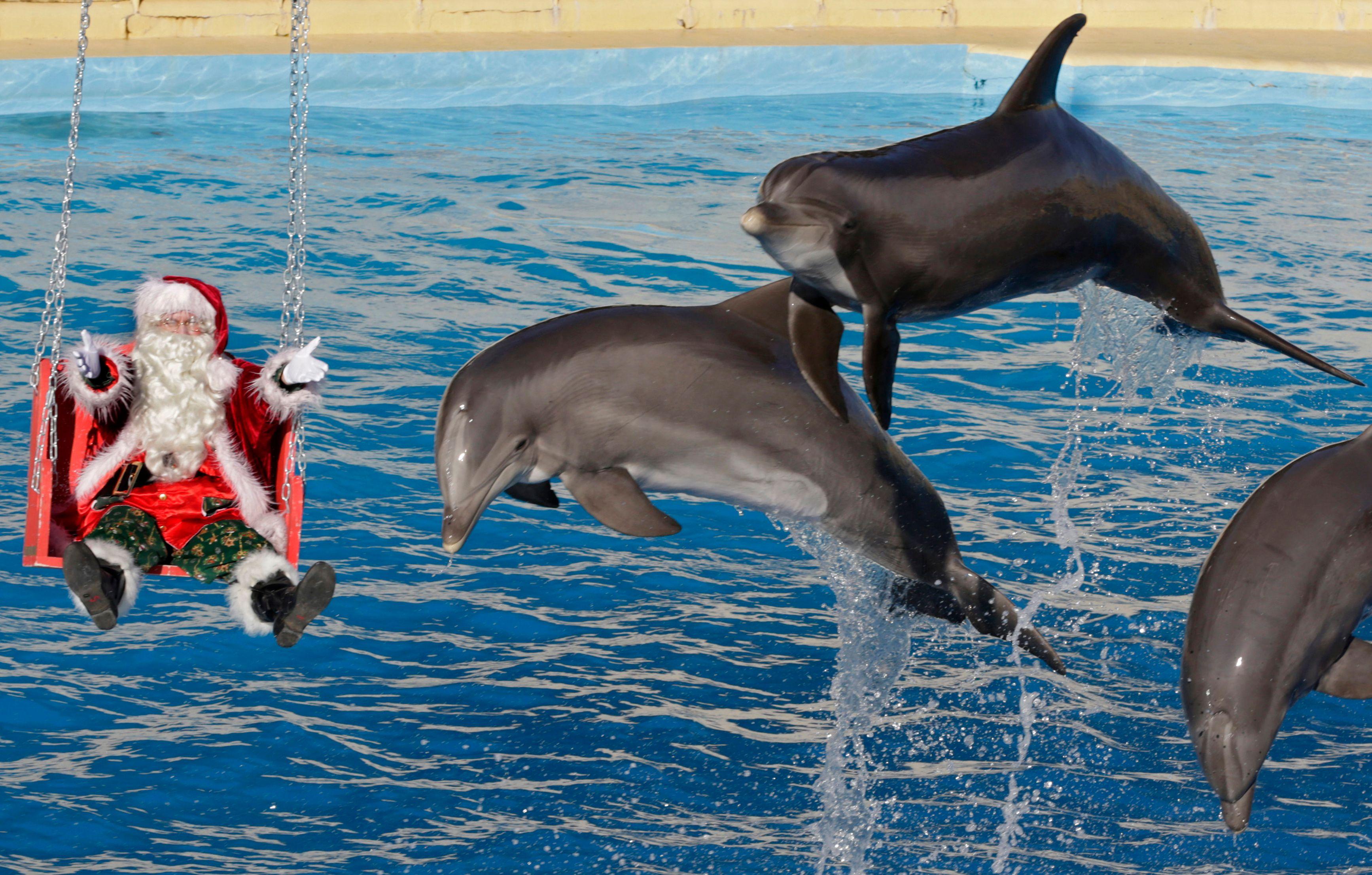 De nombreuses personnes souhaiteraient nager avec des dauphins avant de décéder.