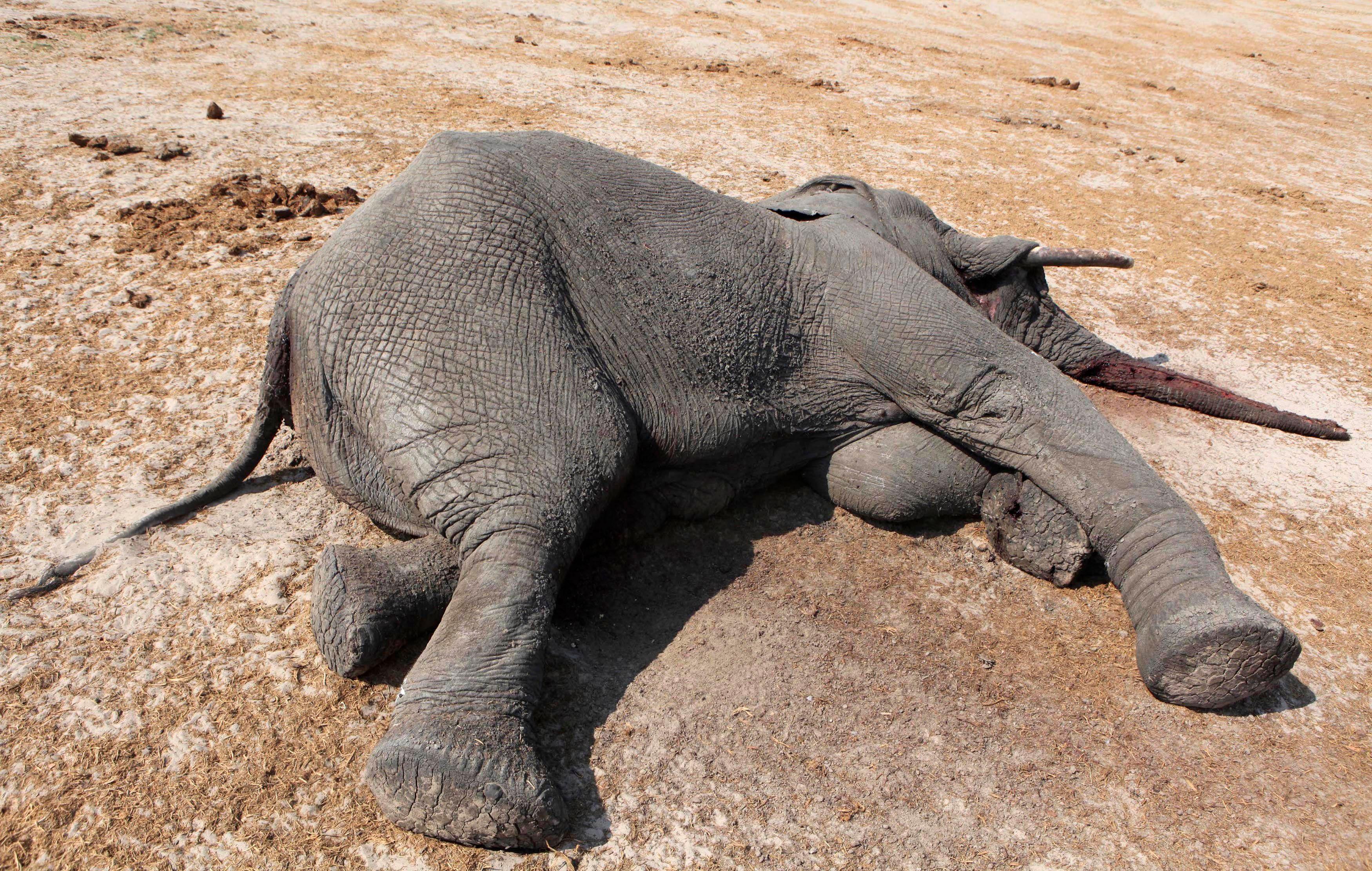 Depuis quatre ans, le prix de l'ivoire est passé de 550 euros le kilo en 2010 à 1 540 euros cette année