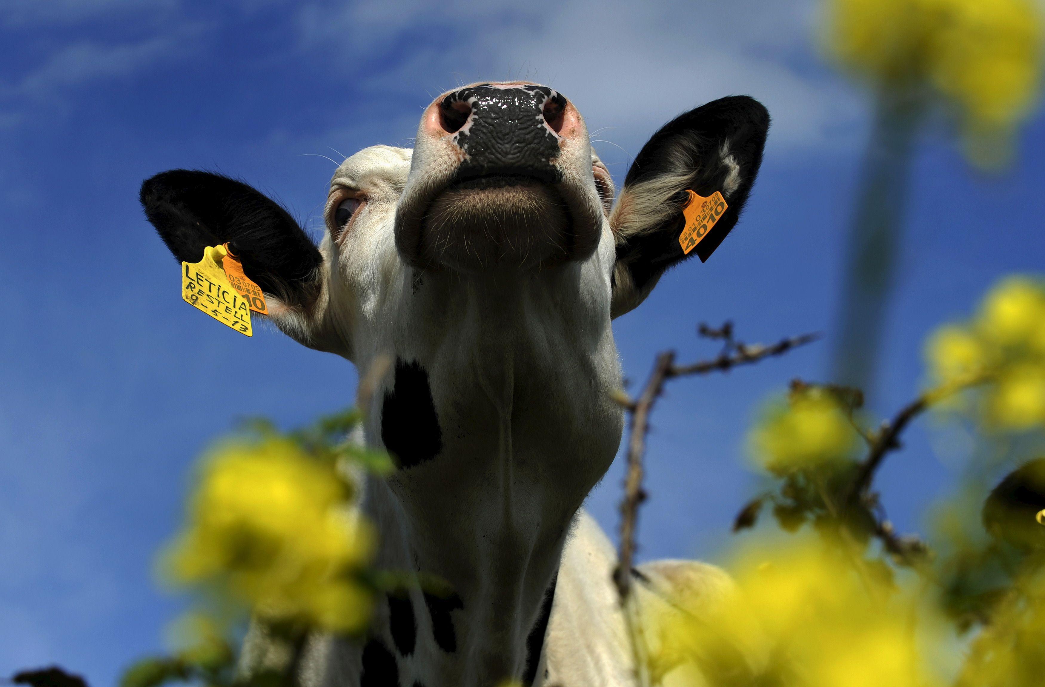 Crise agricole : pourquoi la baisse des charges décidée par le gouvernement ne sauvera pas plus l'élevage intensif français qu'on a sauvé la sidérurgie lorraine