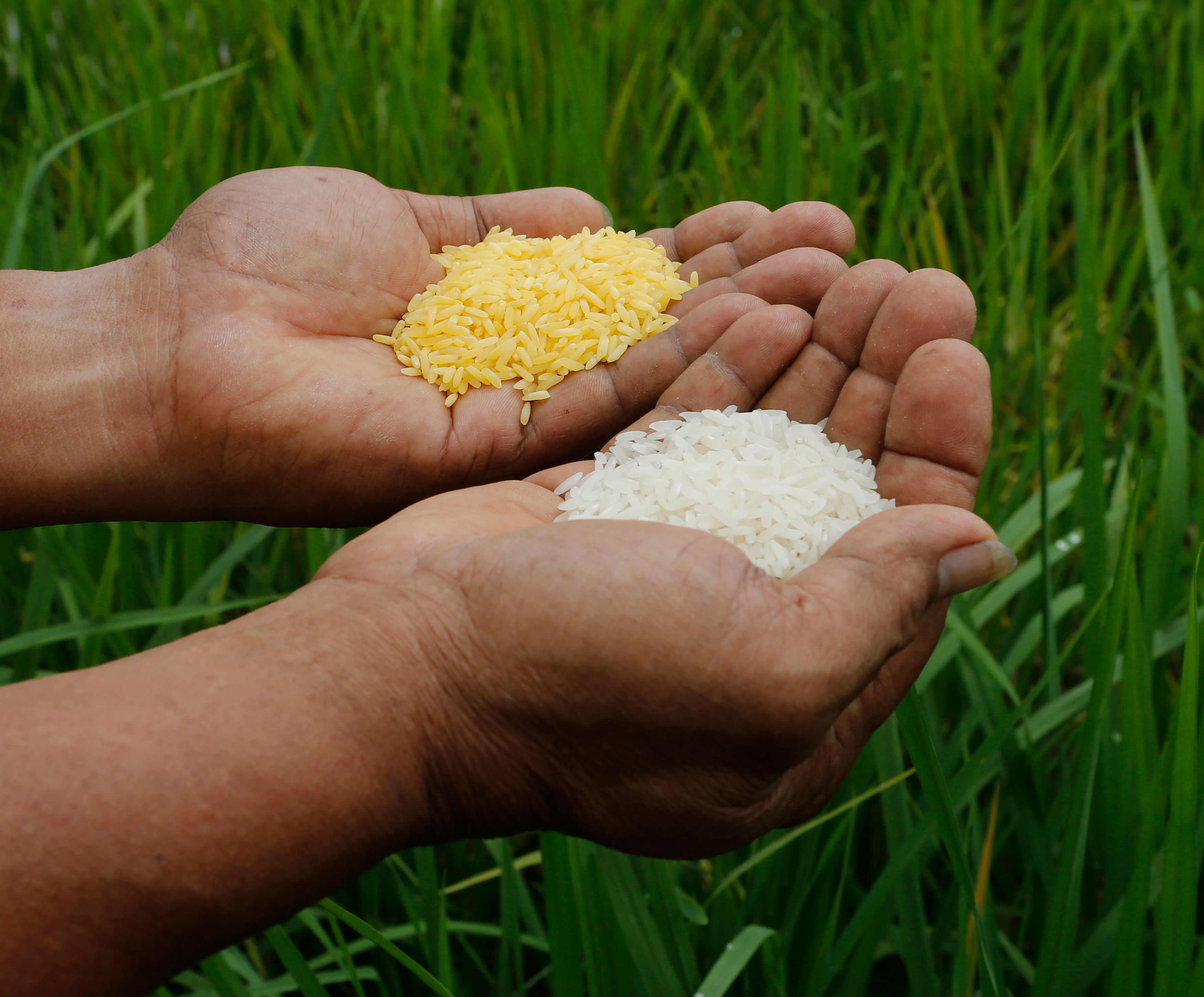 """OGM : 110 prix Nobel accusent Greenpeace d'être """"anti-scientifique"""""""