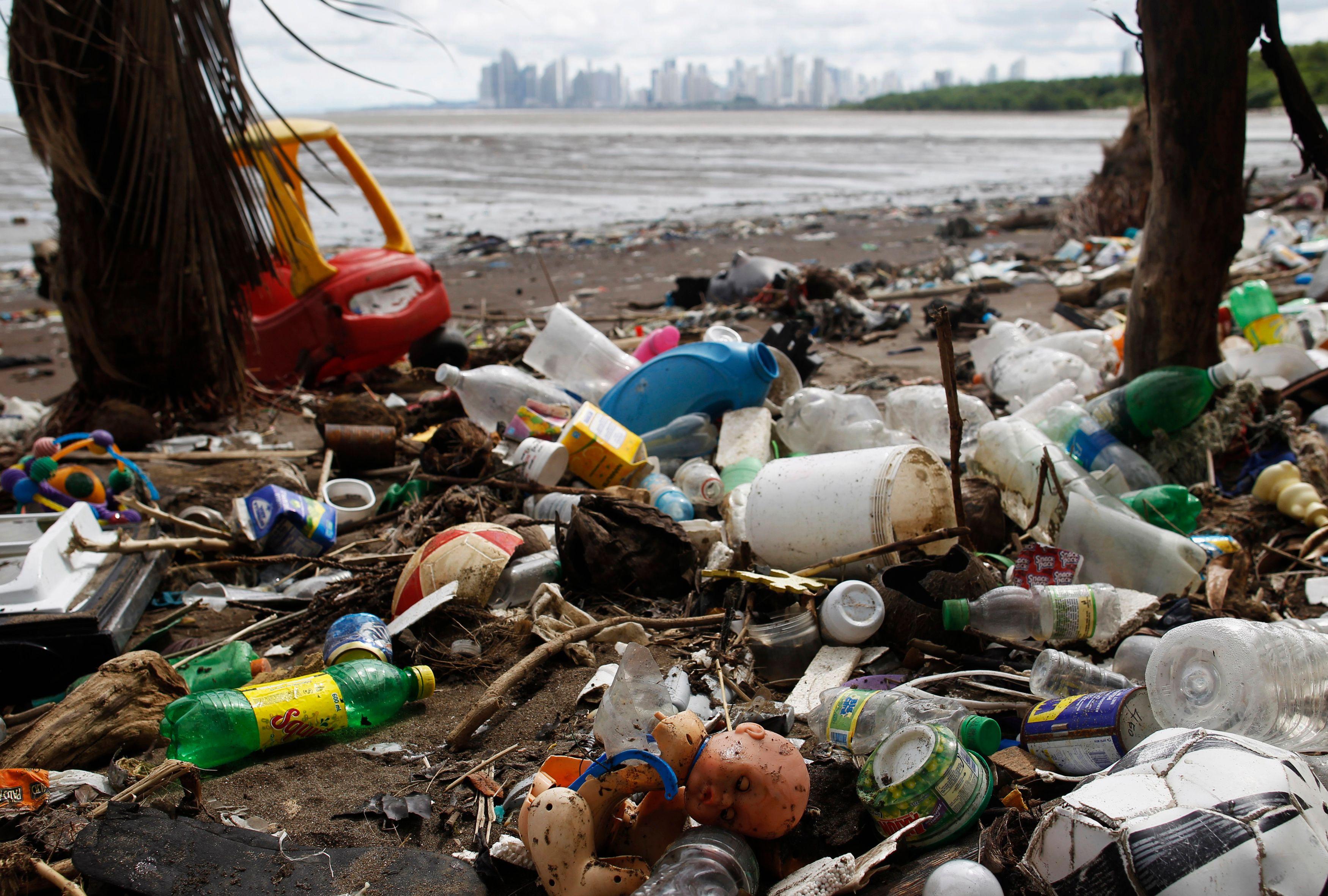 Des milliers de tonnes de plastique pourraient avoir été ingérées par les animaux marins.
