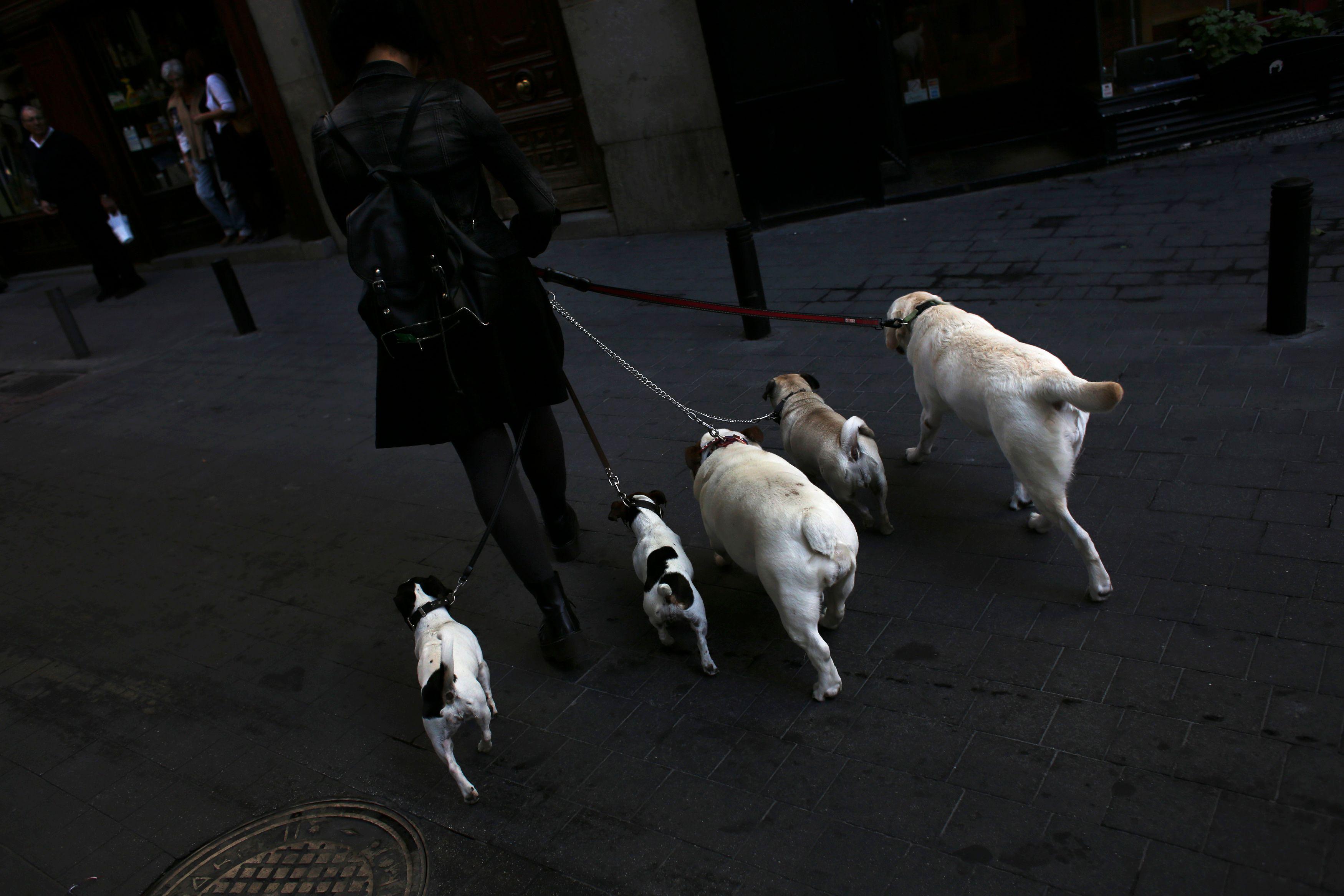 Béziers : Robert Ménard veut ficher les chiens de sa commune pour lutter contre leurs crottes