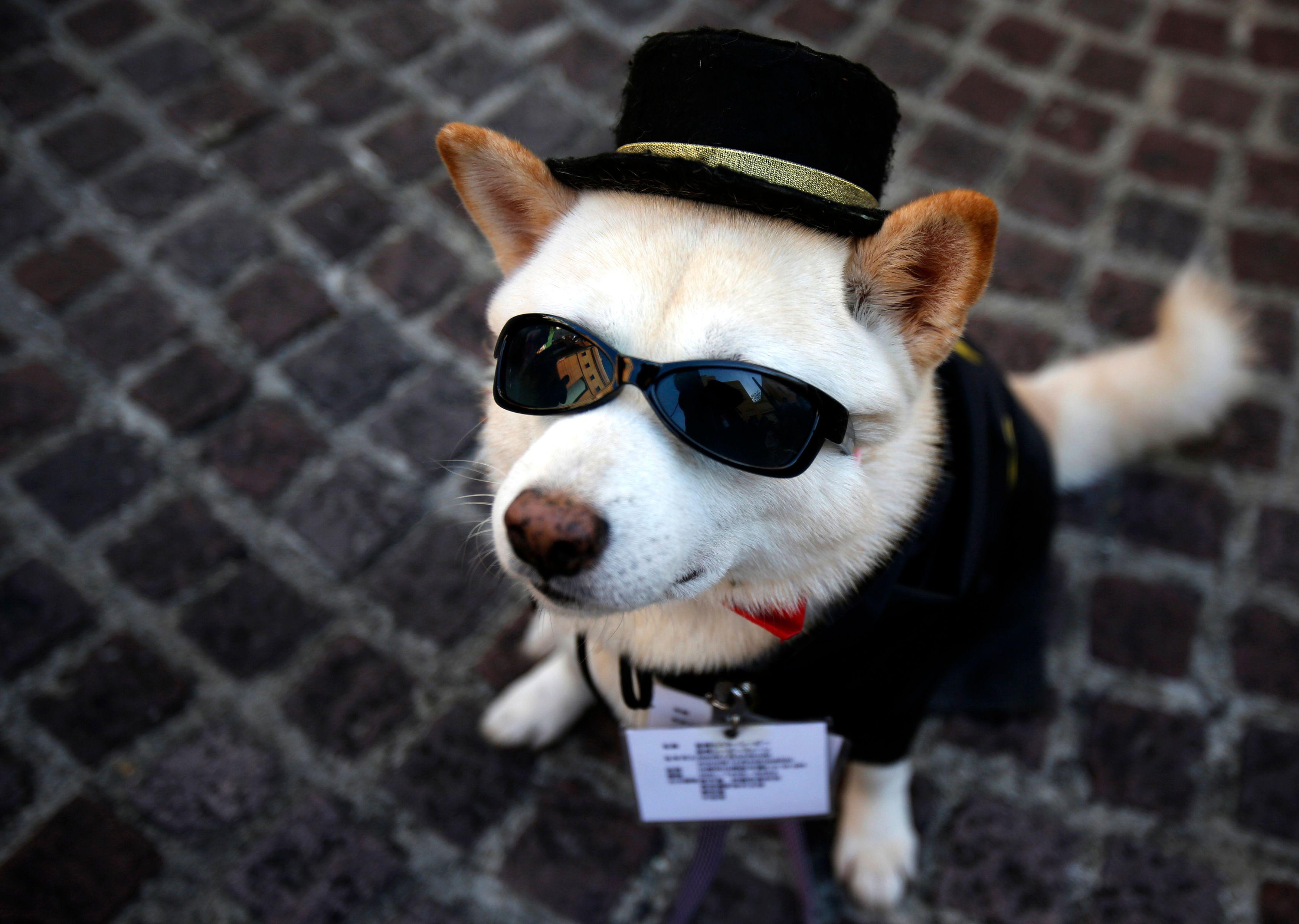 Le parc canin de la place Denfert-Rochereau à Paris inauguré en 2014 permet aux chiens de courir, jouer et batifoler en toute liberté.