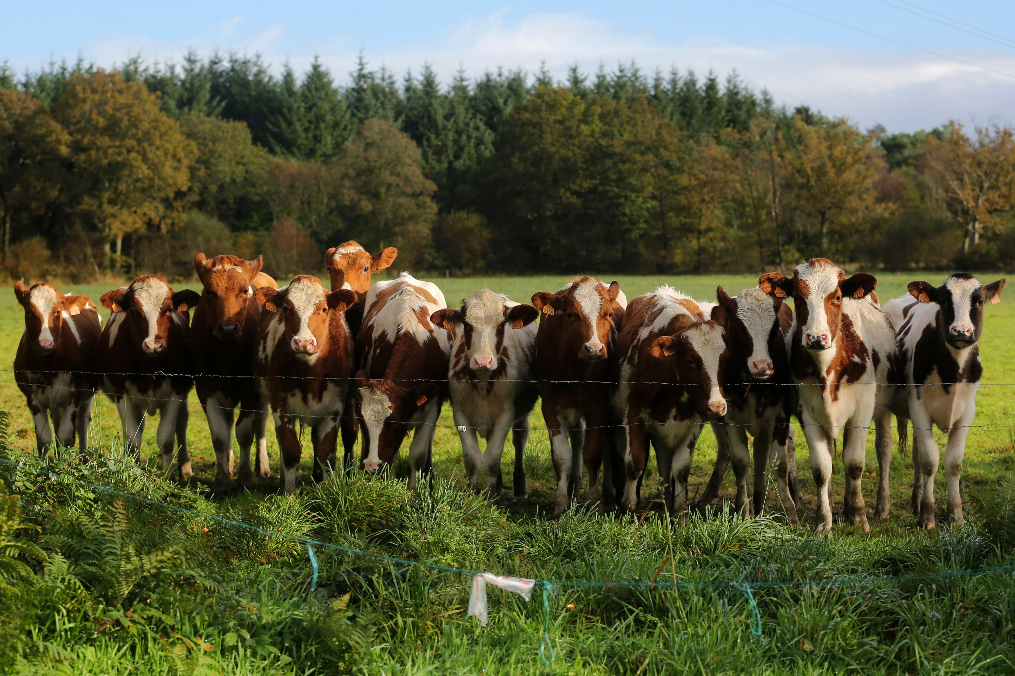 En 2013, la viande bovine s'est retrouvée dans la tourmente après le « horsegate ».