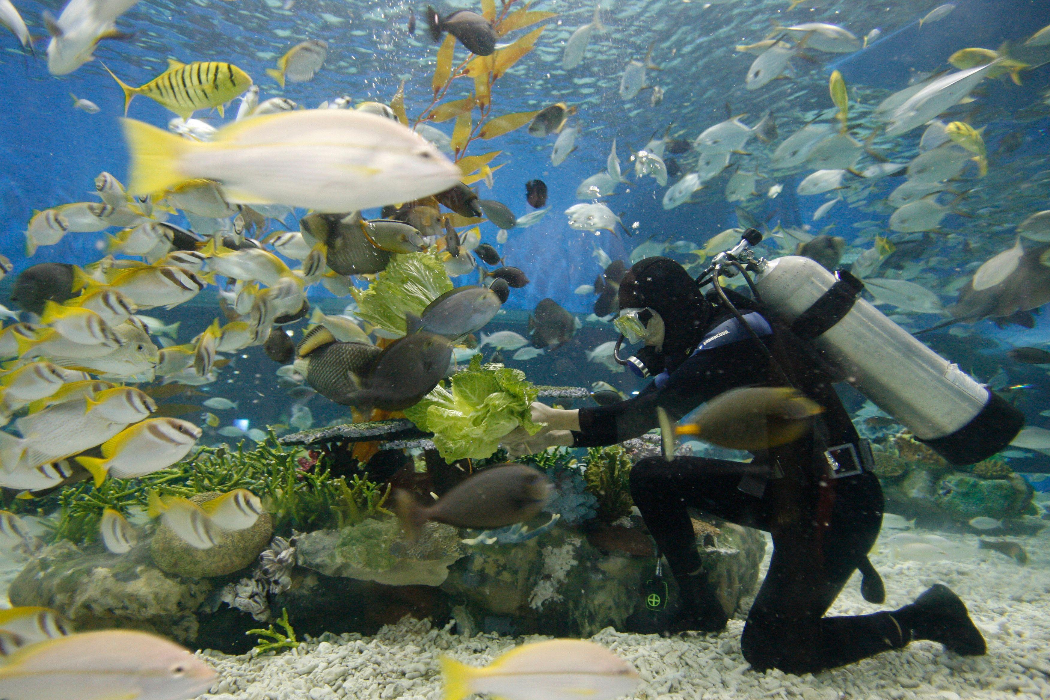 SOS planète en danger : et si notre salut venait du poisson (à condition de tout changer) ?