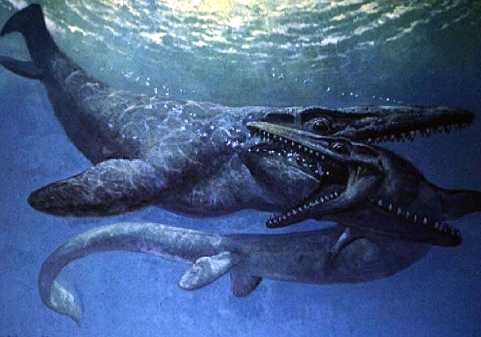 Vue d'artiste de deux mosasaures datant de 1999