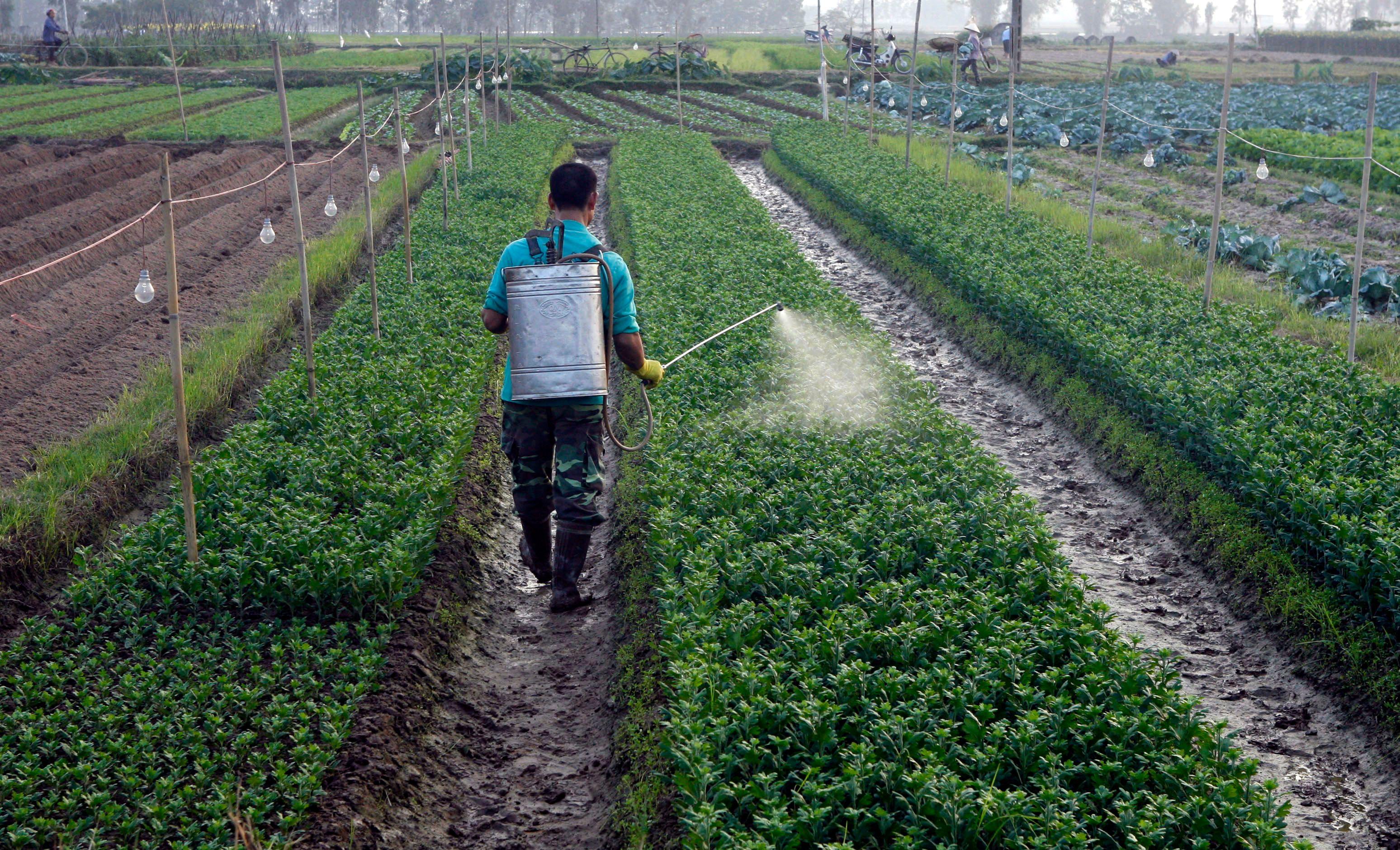 La salade aux pesticides : un aller simple vers l'anxiété, l'inattention... voire la démence