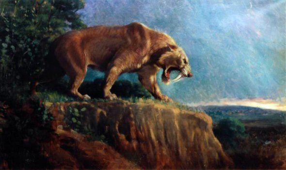 Le smilodon, ou tigre à dents de sabres, a disparu il y a 10 000 ans