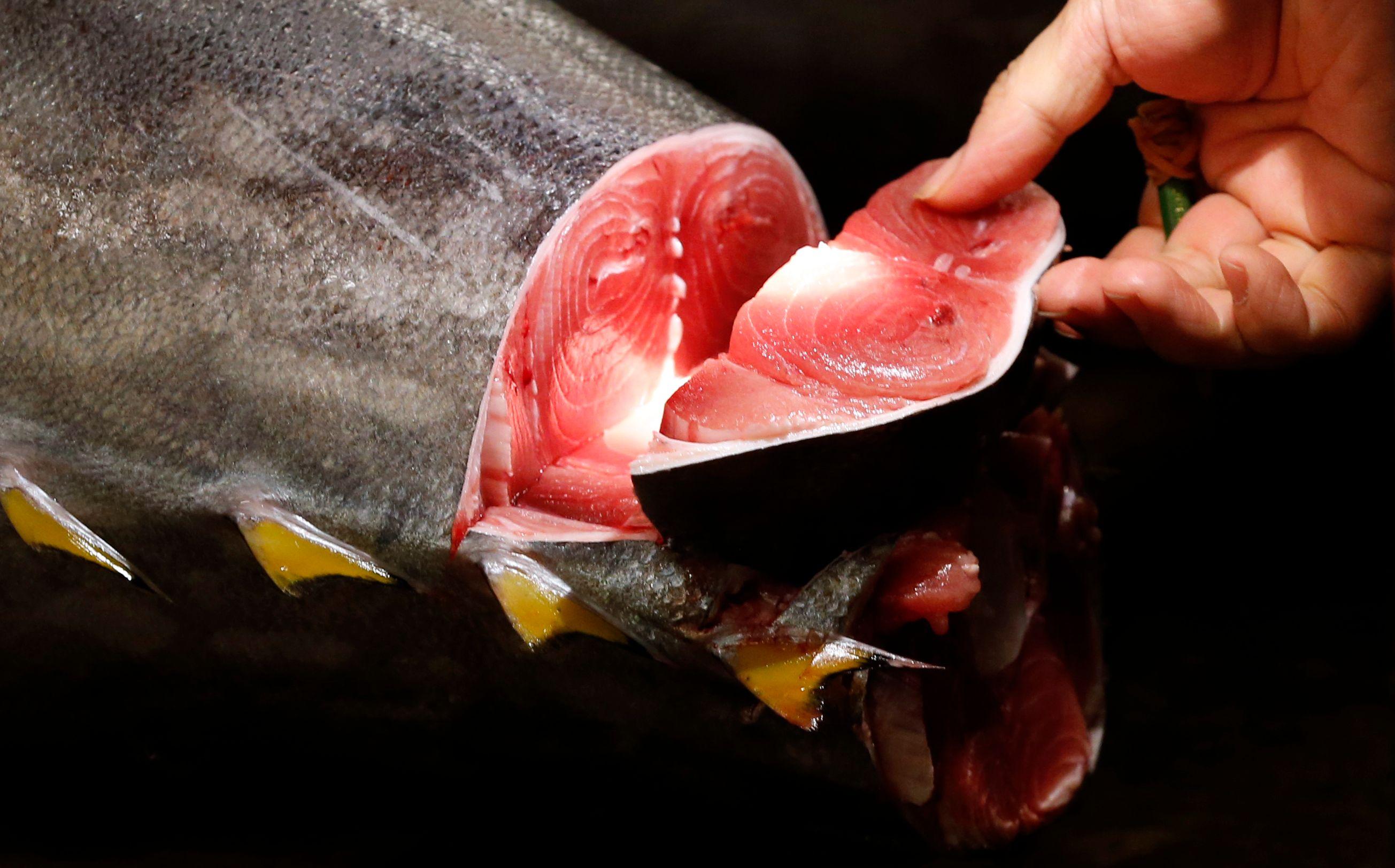Japon : un thon rouge de 230 kilos vendu 51 000 euros