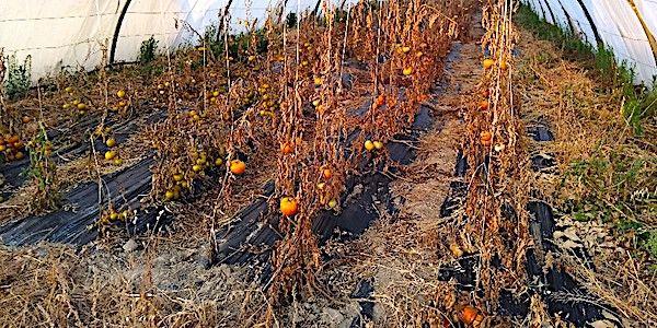 Des serres de légumes bio aspergées de pesticides : à qui profite le crime ?