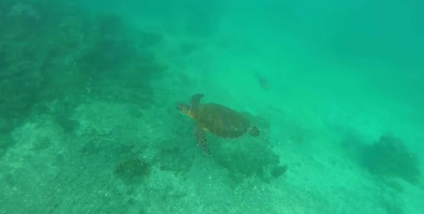 Une nouvelle espèce de tortue a été découverte en Papouasie