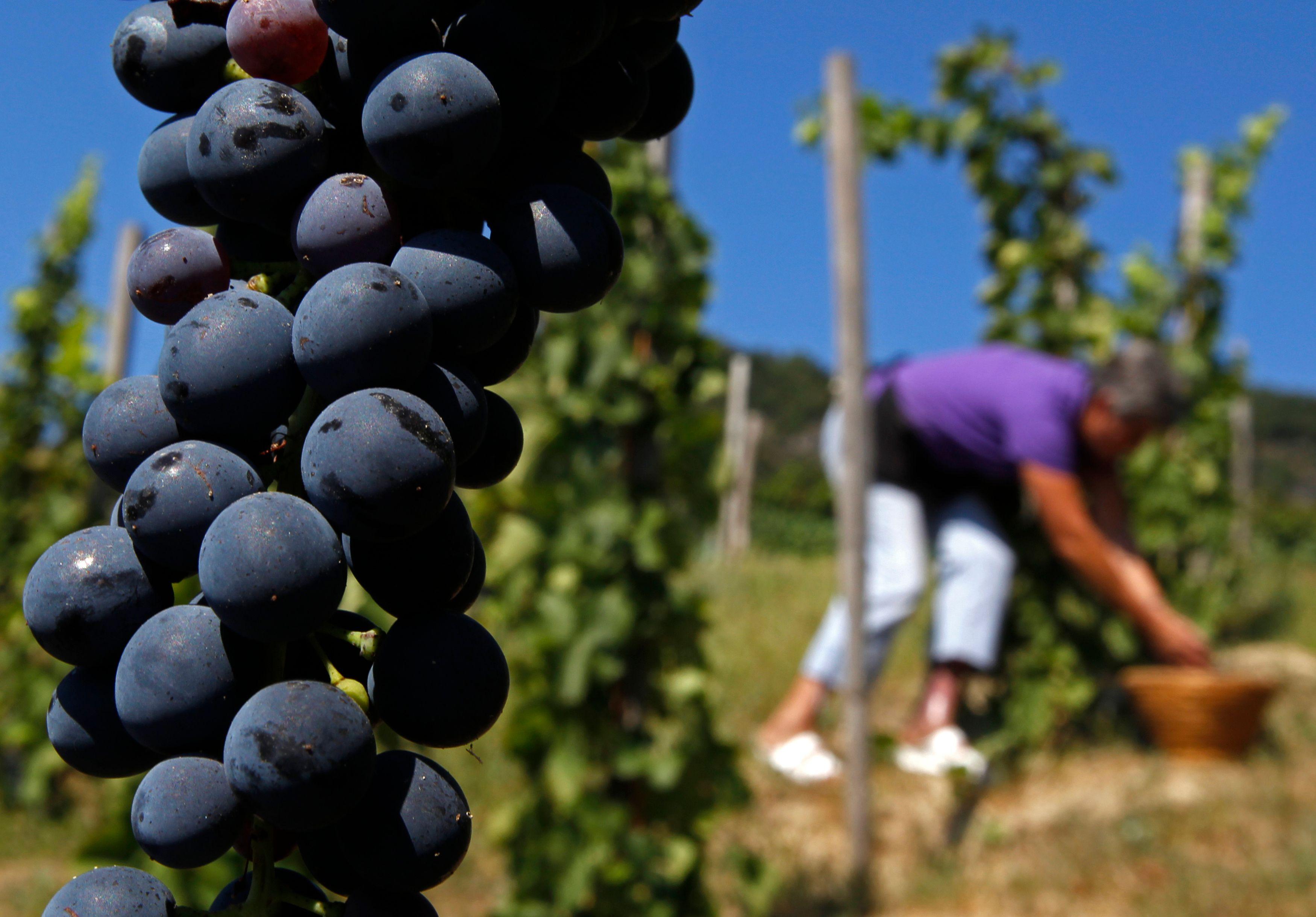 Le secteur du vin représente la deuxième source d'exportation pour la France après l'aéronautique.